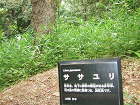 5/29 春の歩こう会